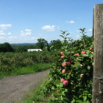 Our Visit To Hillview Farms in Morris County NJ