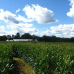 Our Visit To Stony Hill Farm Corn Maze Morris County Destinations