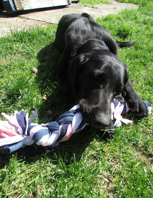 Recycled t shirt dog toy for T shirt dog toy