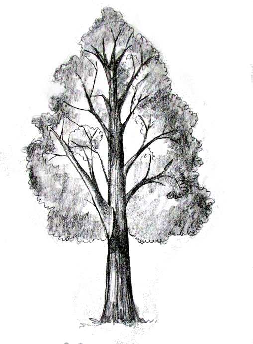 how to draw a tree tutorial - Tree Drawings