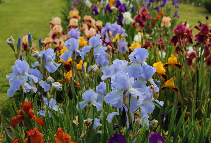 Attractive Our Visit To Presby Memorial Iris Gardens ...
