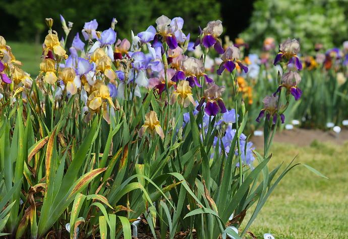 Our Visit To Presby Memorial Iris Gardens