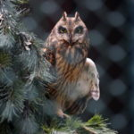 Our Visit To Raptor Trust