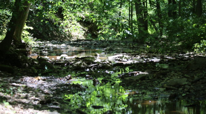 Our Visit To Watchung Reservation