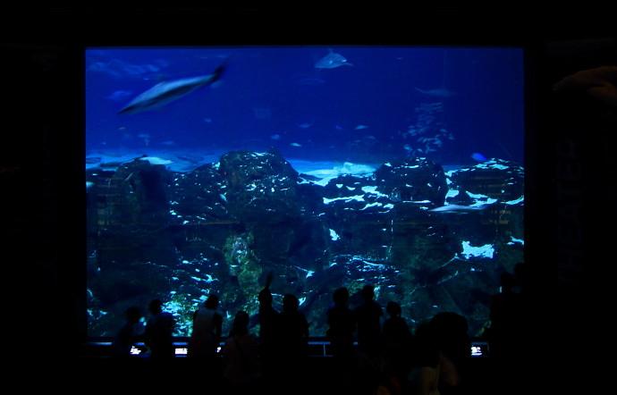 Camden Aquarium Hours