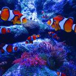 Our Visit To Adventure Aquarium Camden County