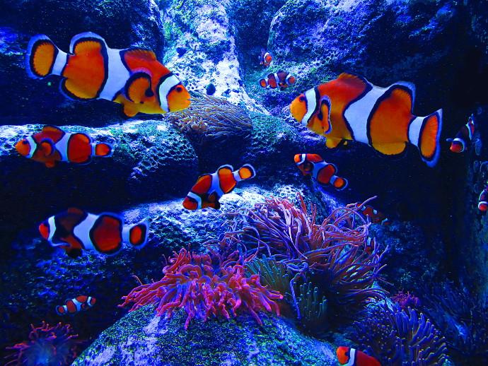 Our Visit To Adventure Aquarium