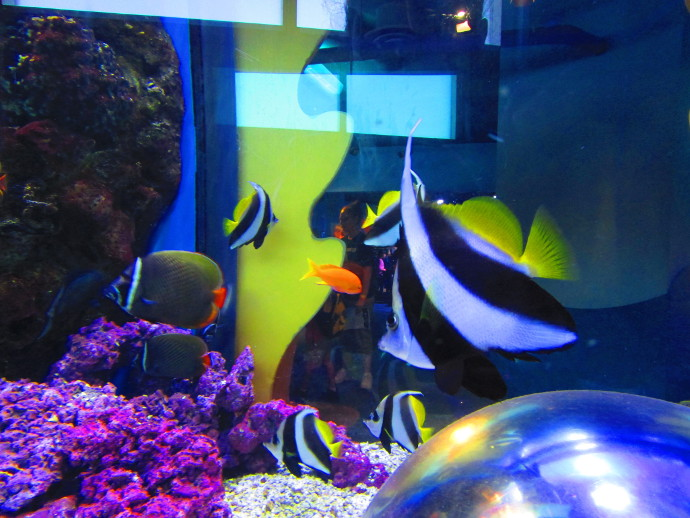 Our Visit To Adventure Aquarium Happy Family Art