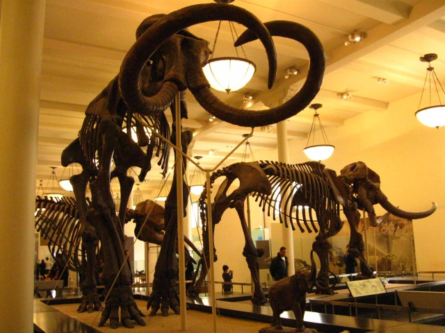 Our Visit To Museum of Natural History New York Daytrip Destinations