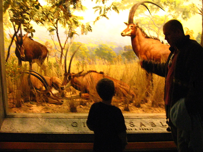 Our Visit To Museum of Natural History