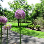 Our Visit To Reeves Reed Arboretum in Summit NJ