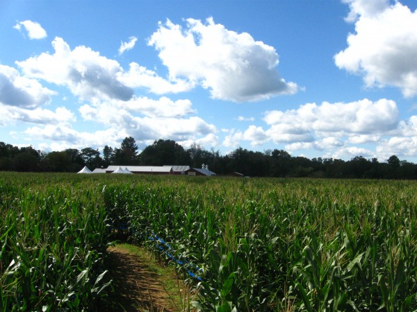 Our Visit To Stony Hill Farm Corn Maze Morris County Destinations