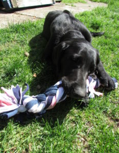 Recycled T-shirt Dog Toy