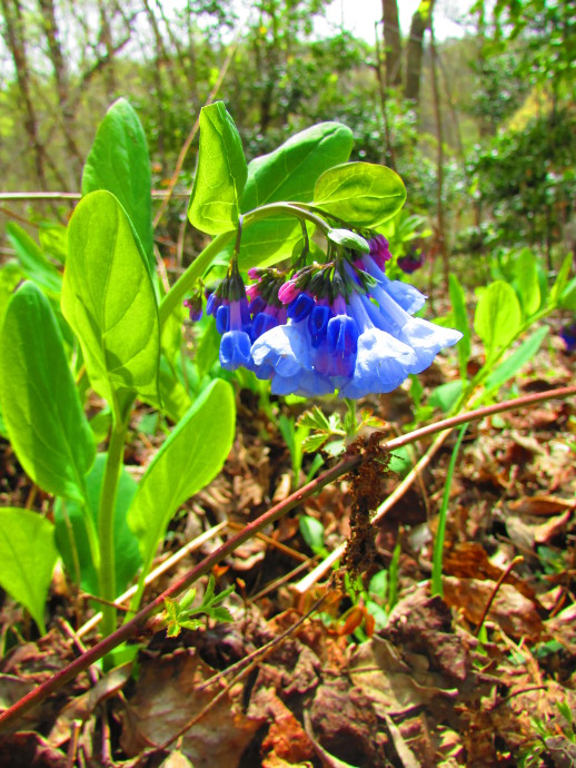 Our Visit To Bowman Hill Wildflower Preserve