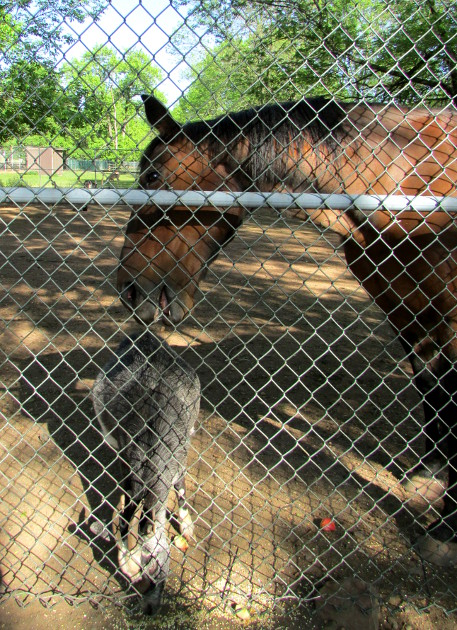 Our Visit To Johnson Park Middlesex County Destinations
