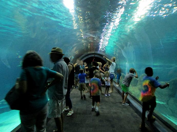 Our Visit To Adventure Aquarium - Happy Family Art