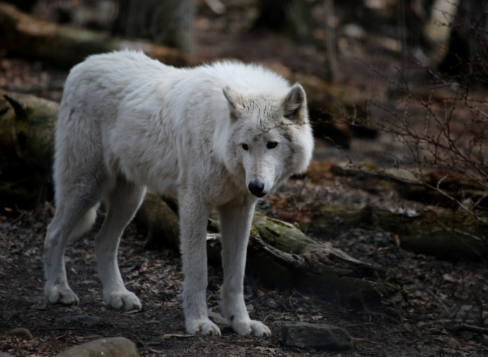 Our visit to Lakota Wolf Preserve
